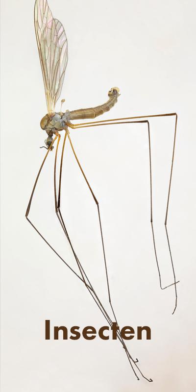 Foto Insect, link naar pagina 'nu'