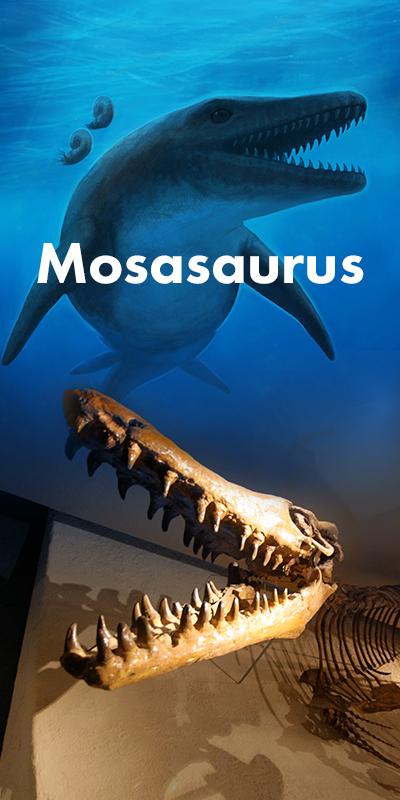 Foto mosasaurus, link naar pagina 'vroeger'