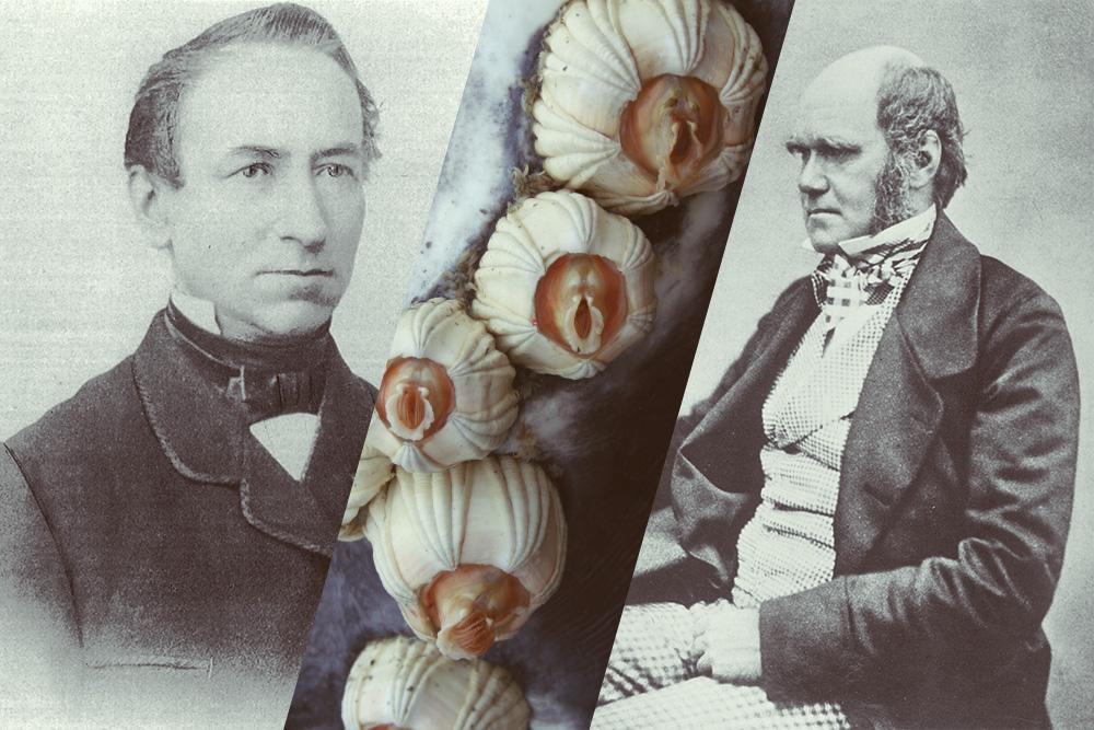 Foto van Darwin en de Bosquet